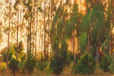16x24 Sunset Grove forweb.jpg