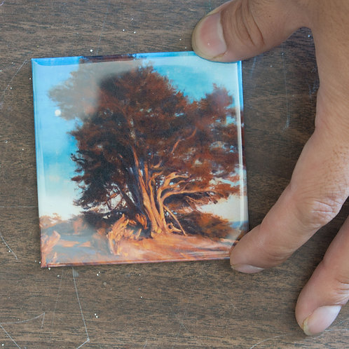 """Sunset Cypress"" 3x3 in. Magnet"