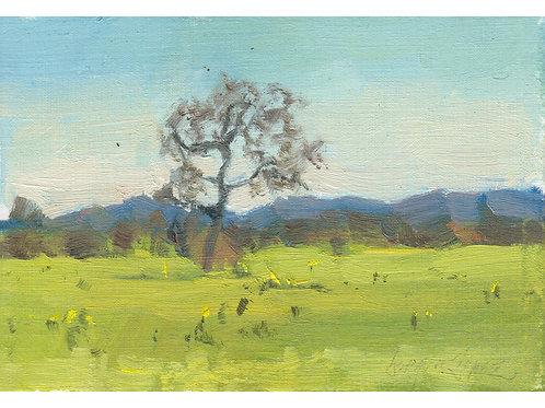 Paint Drip #27 Oak In A Young Mustard Field