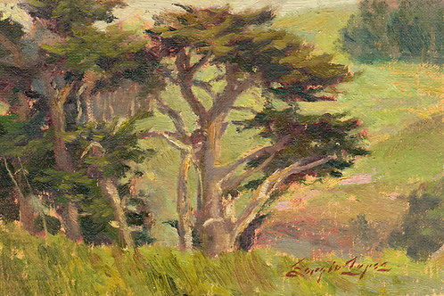 """Tomales Peace"" oil on linen board."