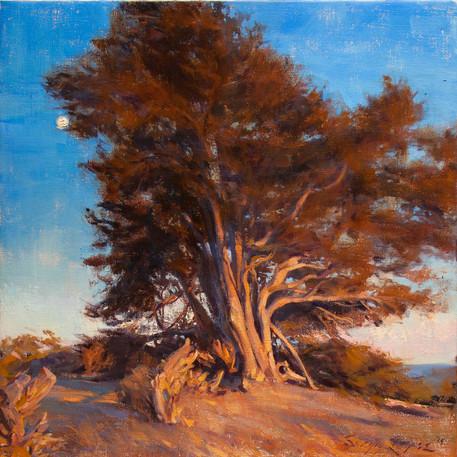 Sunset Cypress forweb.jpg