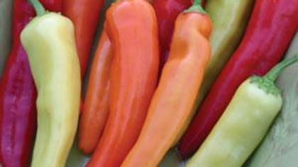 Pepper (Ethnic Hot) - Hungarian Hot Wax