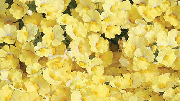 Nemesia - Sunsatia - Lemon