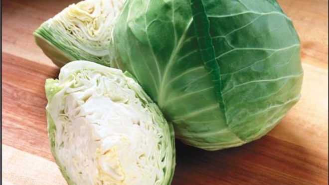 Cabbage - Gregorian