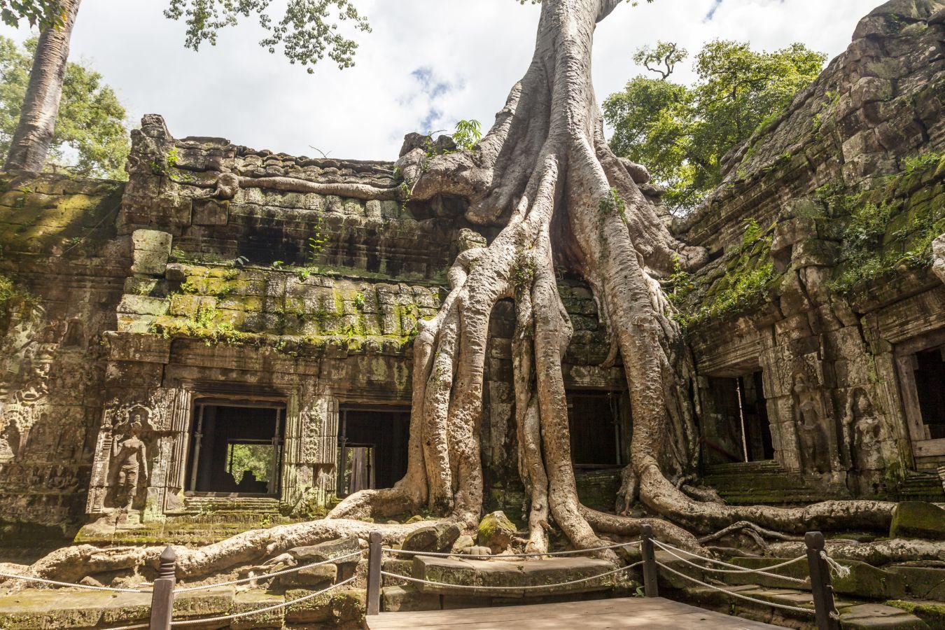 Ta-Prohm-Arbre-Angkor-Cambodge