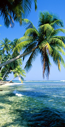 Tropical Island 2015-2-7-18:5:46