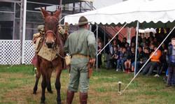 Cavalry Pack Mule