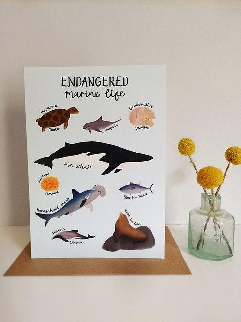 Endangered Marine Life Card