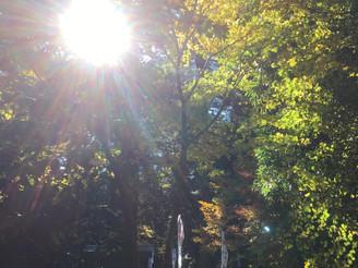 新嘗祭と故三島由紀夫の慰霊の憂国祭