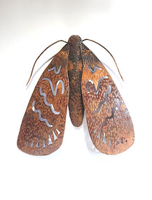 moth9.jpg