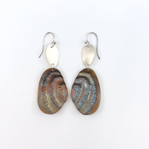 Freshwater mussel shells