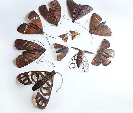 moth-cycle.jpg