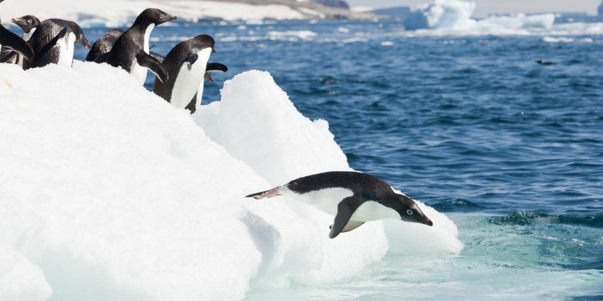 photo antarctique 5