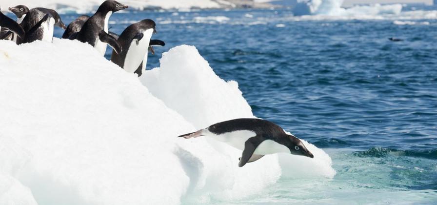 photo antarctique 5