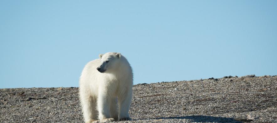 QuarkExpeditions_Spitsbergen-in-Depth_sv