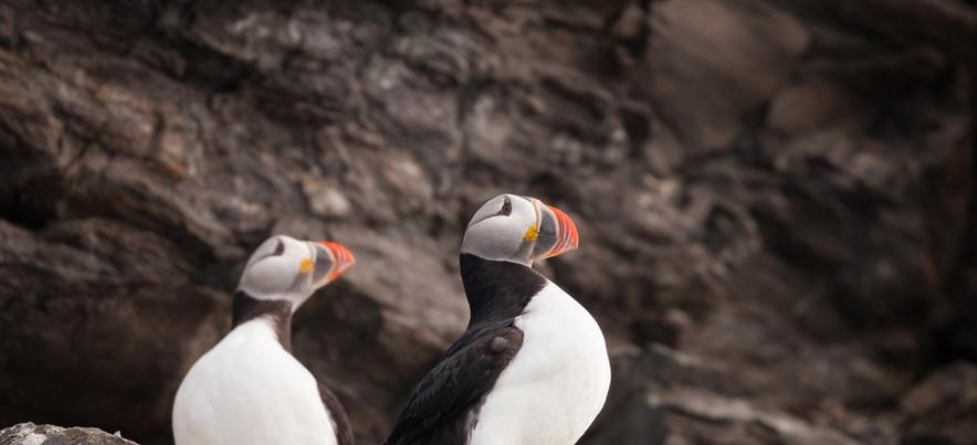 QuarkExpeditions_Spitsbergen-in-Depth_at