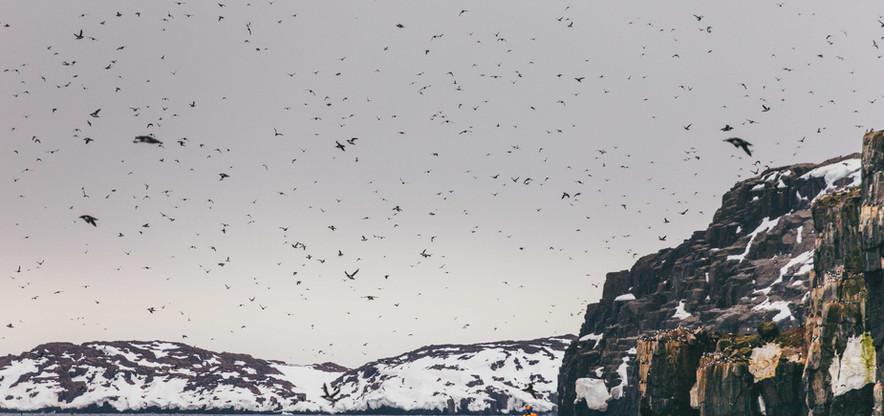 QuarkExpeditions_Spitsbergen-in-Depth_Qu