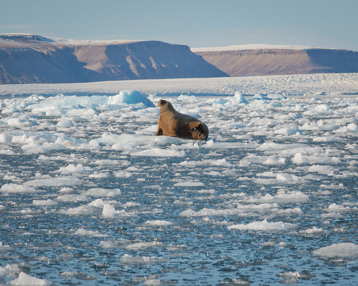 Quark Expeditions_CanadasRemoteArctic_cr