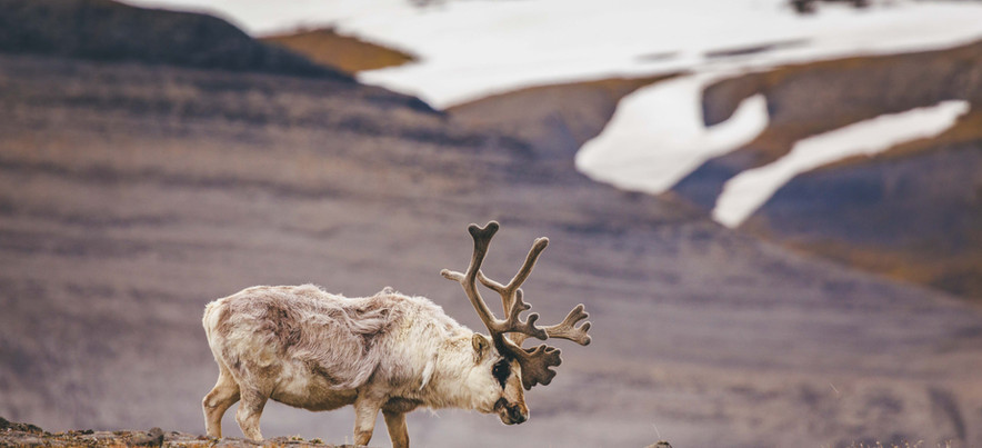 Quark Expeditions_Intro to Spitsbergen_D