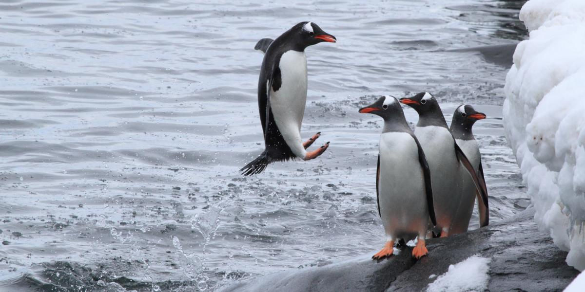photo antarctique 3