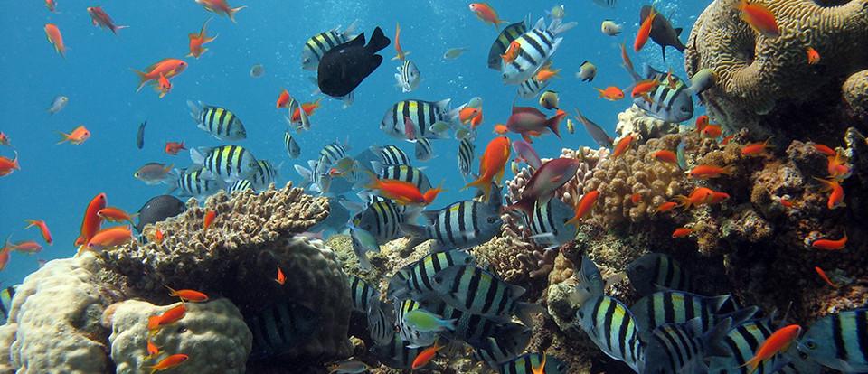 mer-morte-2.jpg