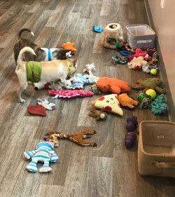 chihuahua_toys.jpg