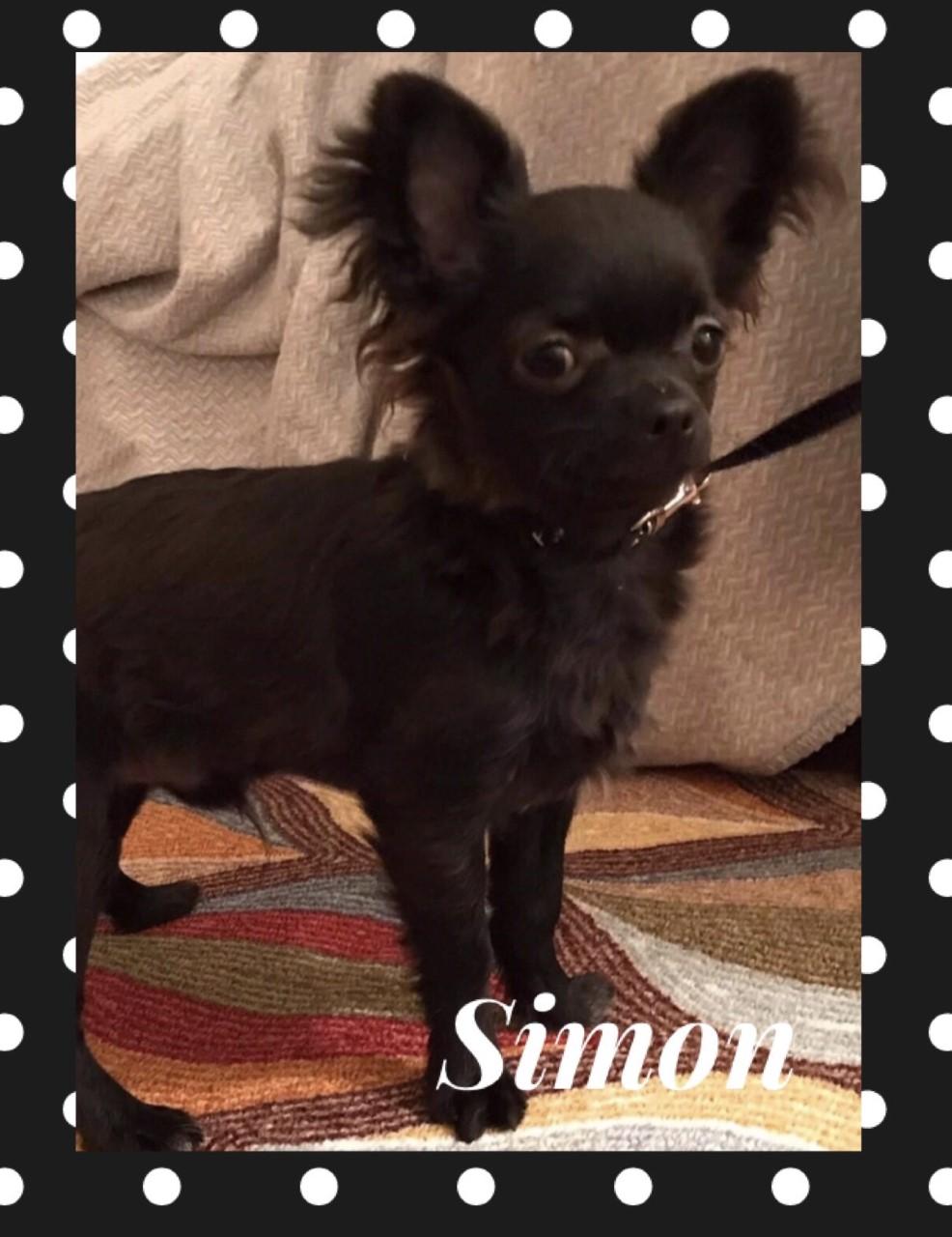 simon_says