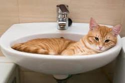 cat bath.jpg