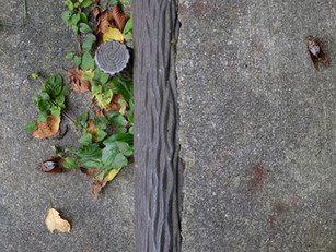 蝉から秋の虫へ