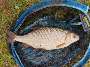 Lovely roach caught by one of our regulars