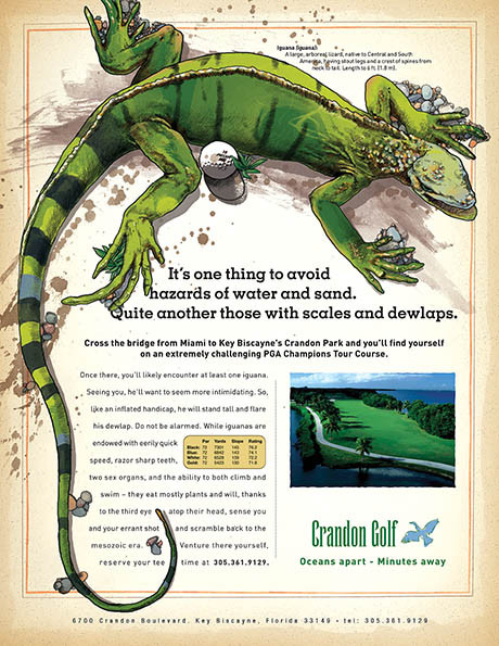 Crandon_Iguana.jpg