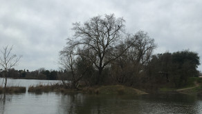 HERON ROOKERY AND HIGH WATER
