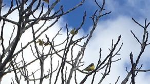 BIRDS ARE VANISHING