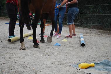 Teambuilding mit Pferden Niedersachsen