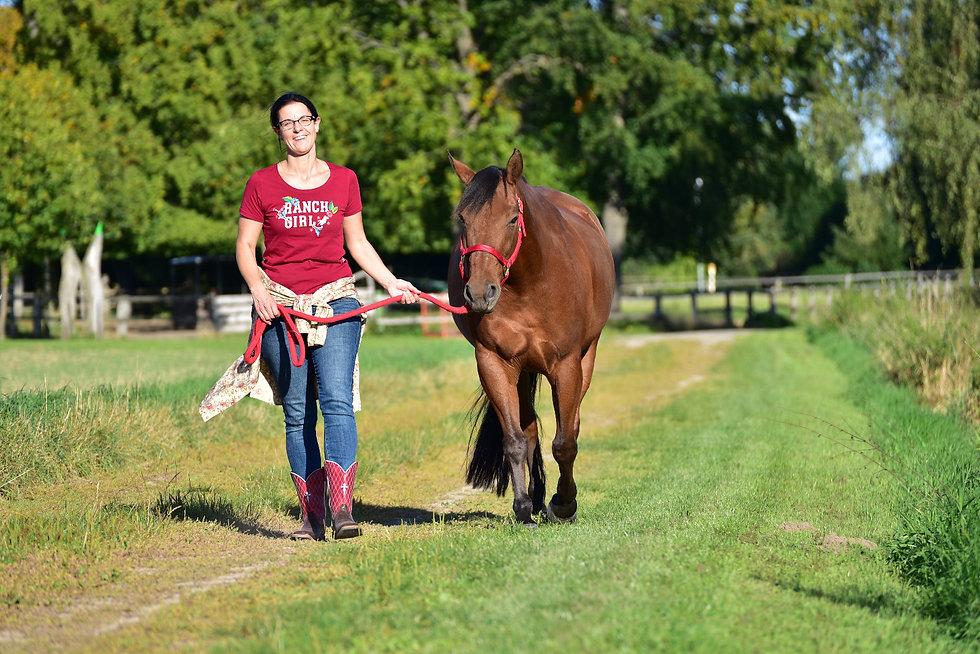 pferdegestütztes Teamcoaching