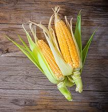 auto-cueilette maïs baie-comeau