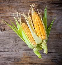Camerise achat québec Auto-cueillette maïs Baie-Comeau