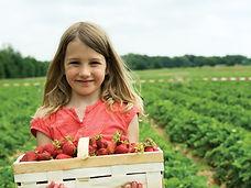 camerise achat quebec auto-cueillette fraise Baie-Comeau