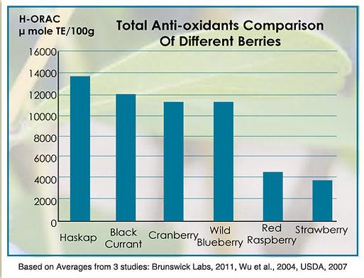 Camerise comparaison antioxydants petits fruits
