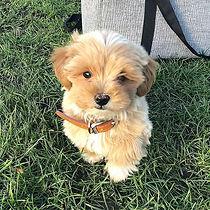 Who's a good boy then_ 🐶👈🏼_._._._._#d