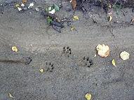 Otter Prints.jpg