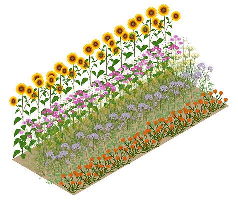 Schmetterlingsbepflanzung_Schmetterlingsgarten_Gestaltung_Architektur