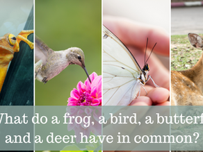 What do frogs and butterflies have in common?