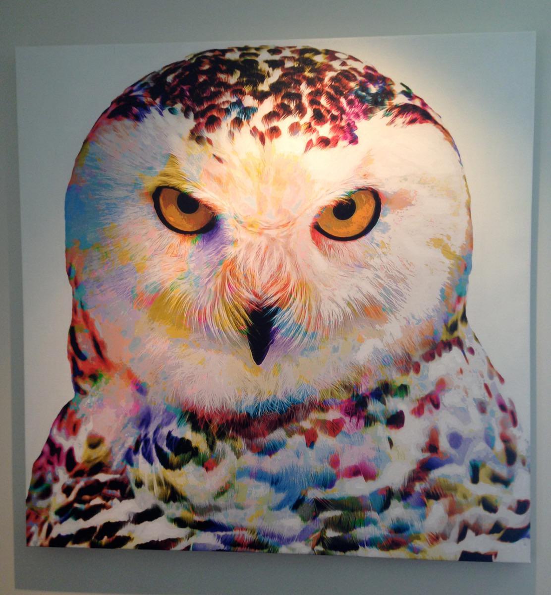 Show Owl (2015)