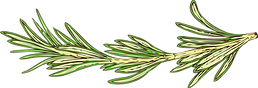 rosemary (1).png