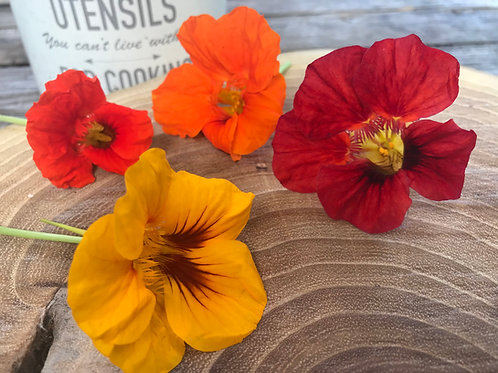 Capucine fleur, 15  fleurs