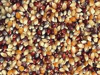 Pleasant_Grove-Popcorn_Multi_Color-2_edi