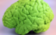 Highly sculpted brain 3d print replica in neaon green
