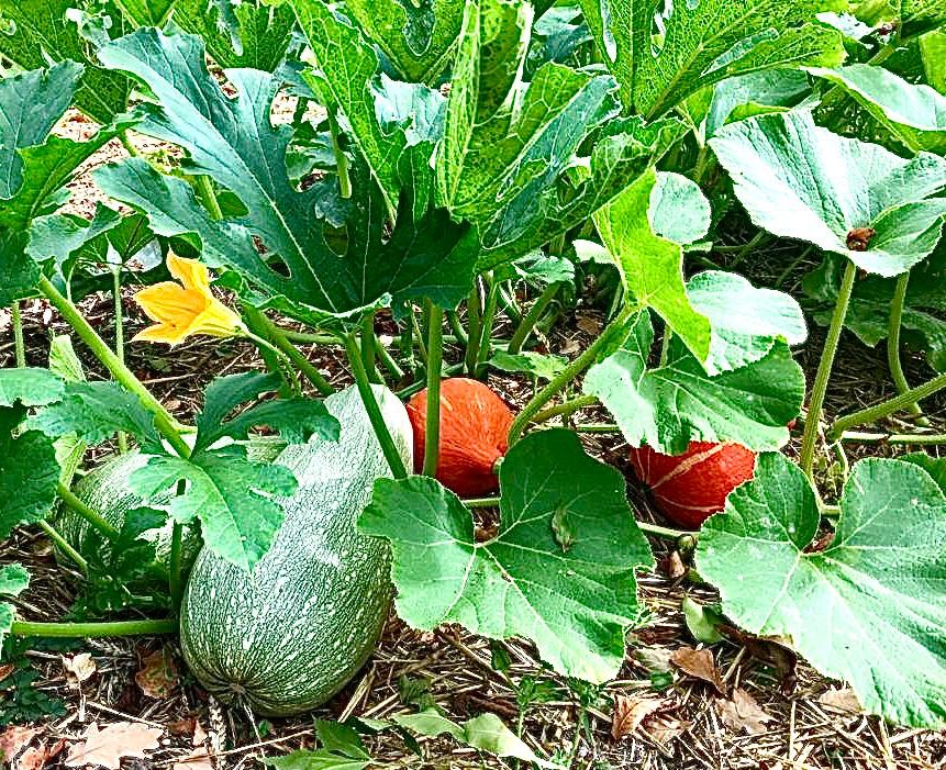 09_jardinduboisdupuits_jeuneetrandonnee_