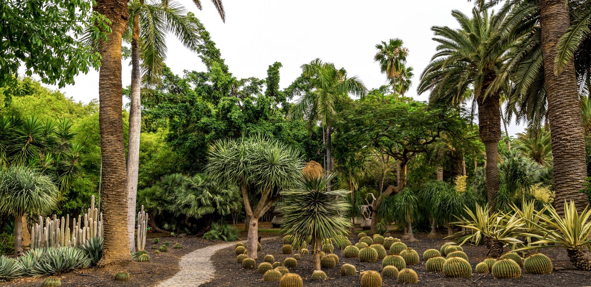 Jardín Botánico Del Palmetum_tenerife_
